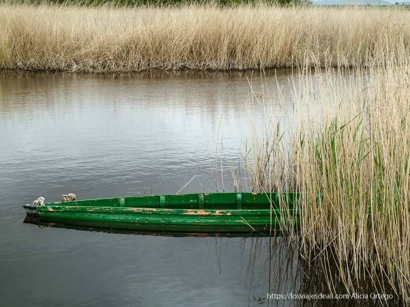 barca verde en el agua entre carrizos repaso anual