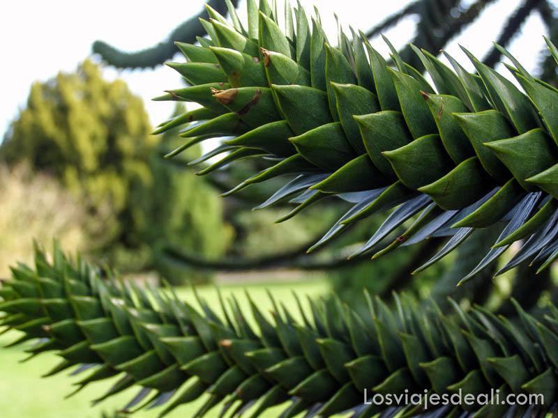 planta exótica tipo cactus verde en el jardín botánico de londres