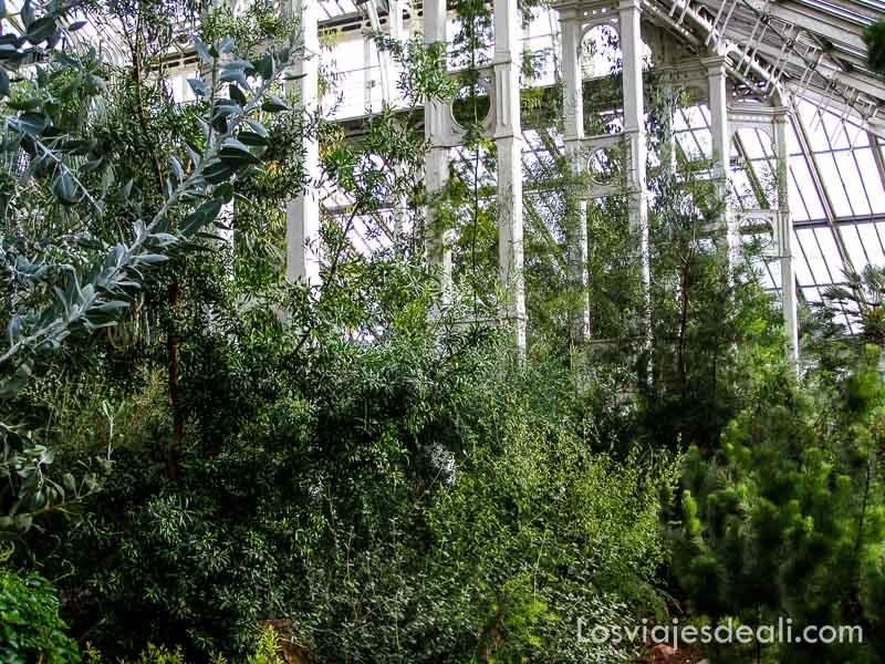 interior de invernadero lleno de plantas tropicales en el jardín botánico de londres