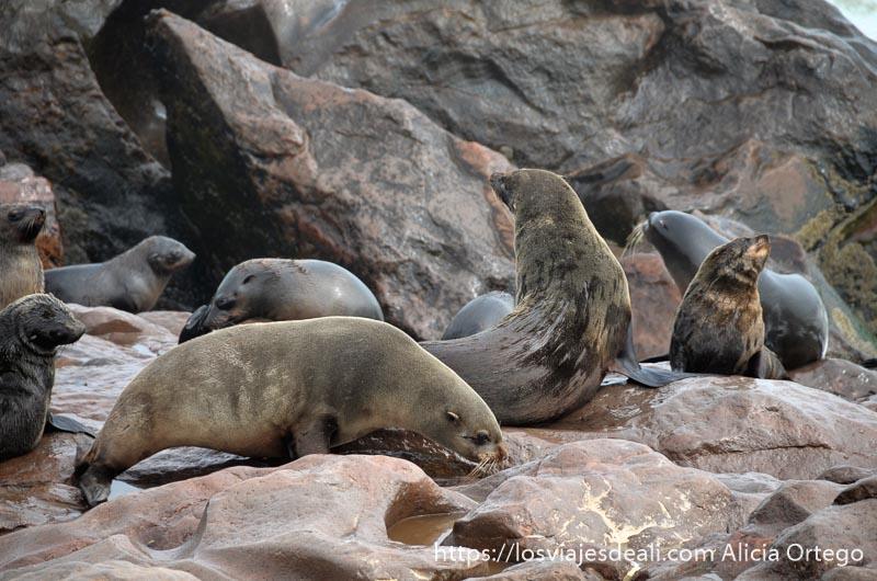 dos leones marinos sobre rocas