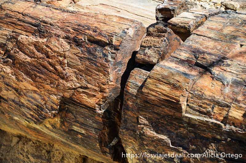 detalle de tronco petrificado con grieta en el centro