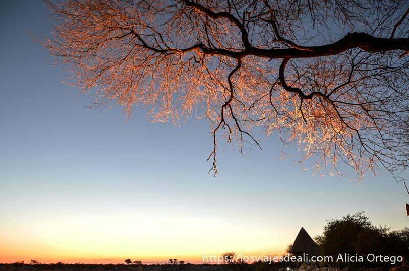 ramas de árbol rojizas por la luz del sol al atardecer