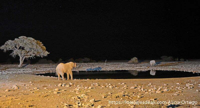 lago con elefante en un extremo y rinoceronte enfrente foto nocturna