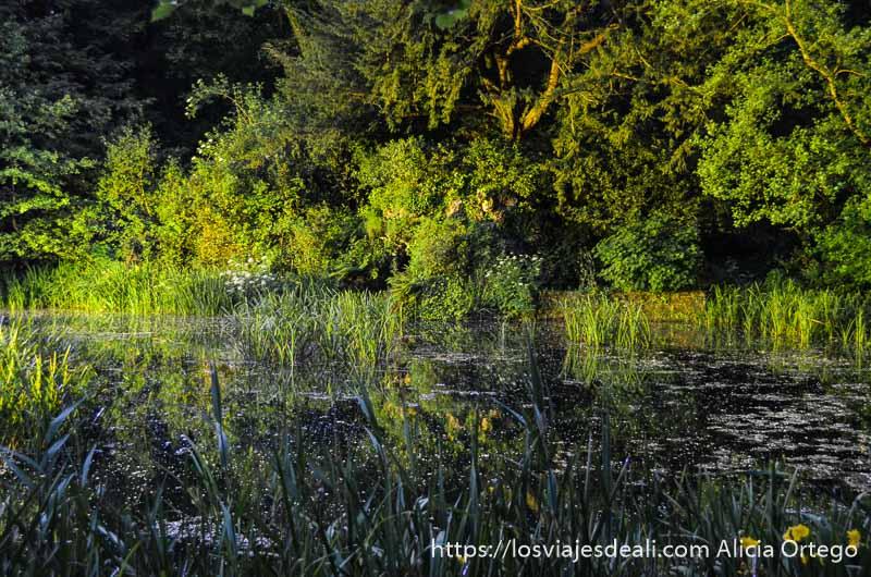 estanque con plantas y luz del sol del atardecer