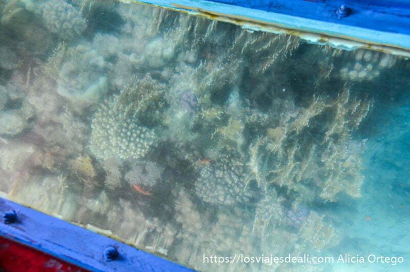 corales vistos a través de cristal de barca
