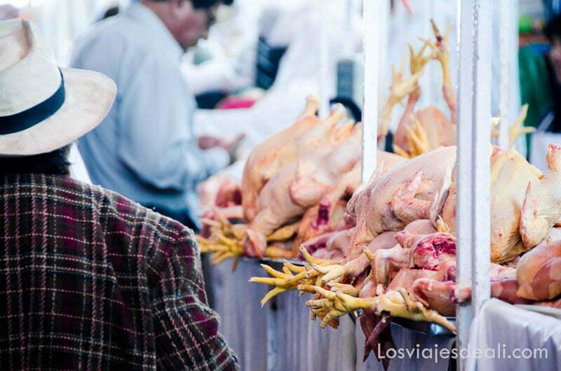 pollos alineados para la venta