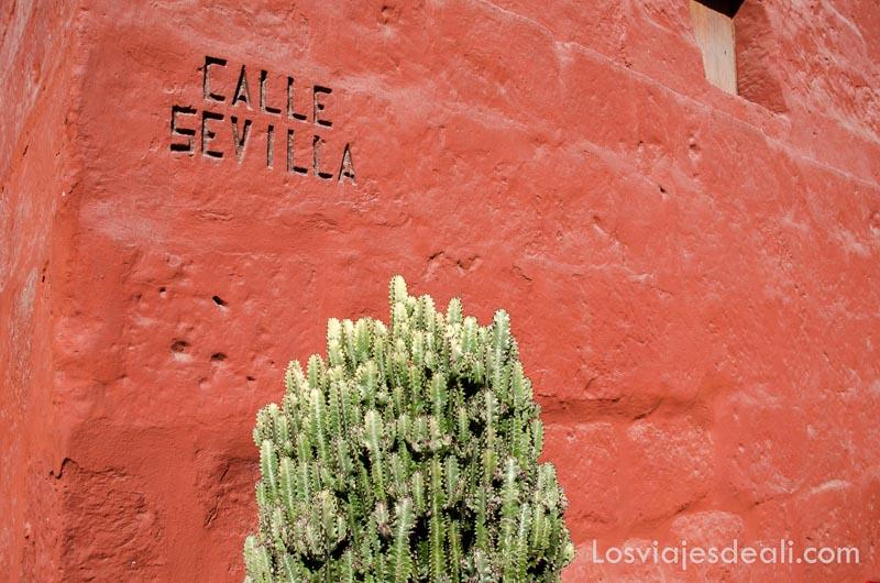 """cactus verde junto a pared naranja oscuro donde pone """"calle sevilla"""" en el convento de arequipa"""