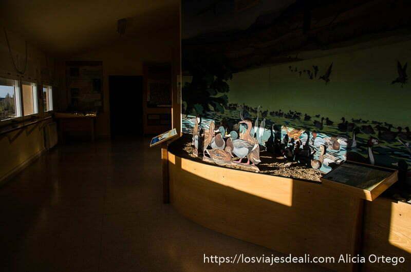 centro de visitantes con mostrador con figuras de cartón de patos y aves