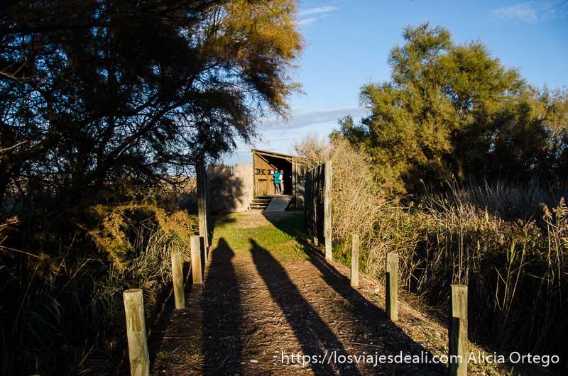 camino entre matorrales y árboles a un apostadero para ver aves a la luz del atardecer
