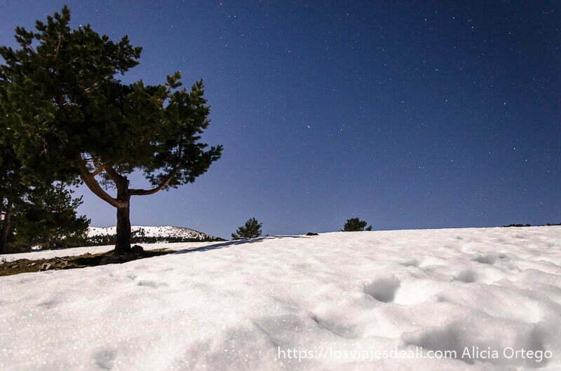 pino rodeado de nieve y cielo con estrellas en la sierra de madrid