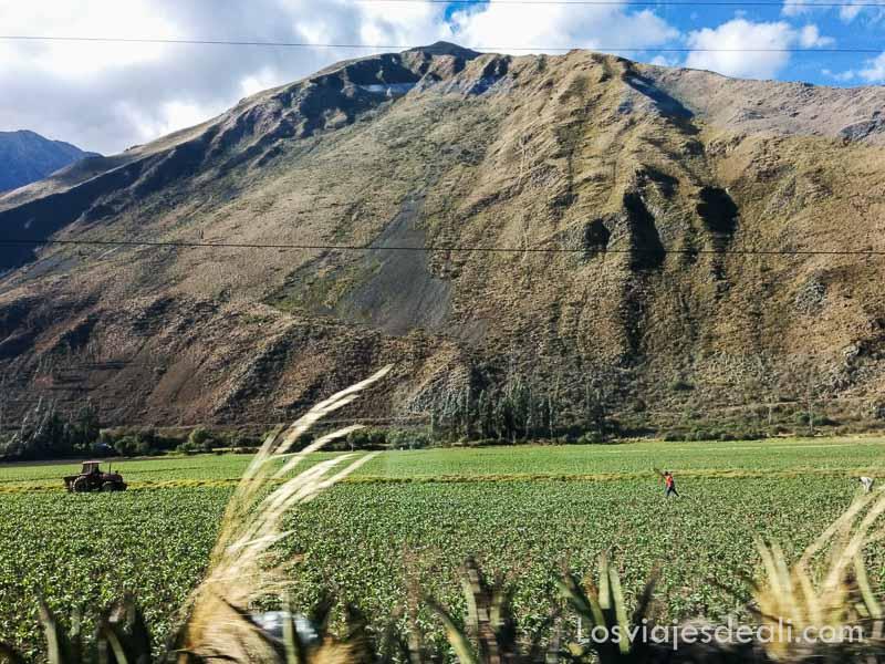 paisaje intermedio entre altiplano andino y selva con campos de cultivo muy verdes