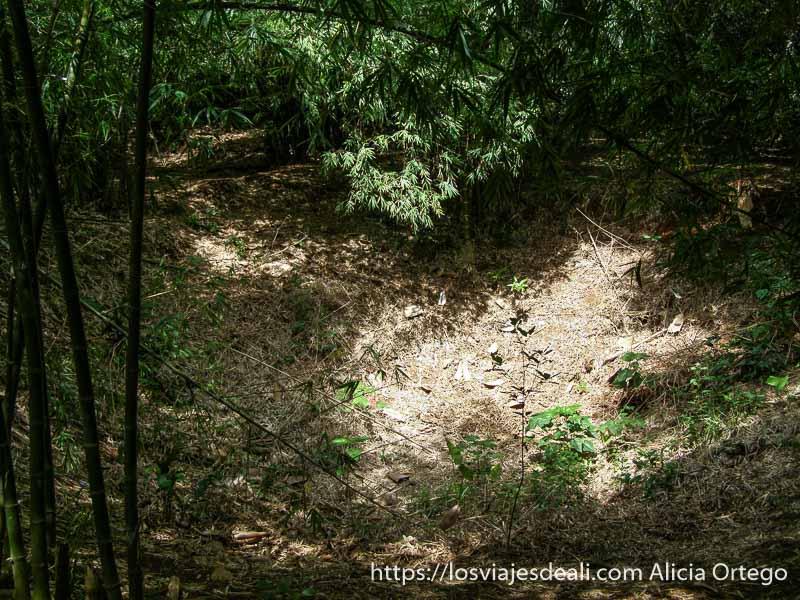 cráter de un obús entre la vegetación