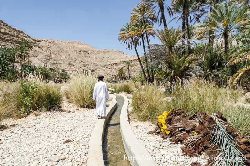 hombre omaní andando junto a un falaj o canal de agua y palmeras alrededor en wadi bani