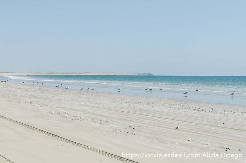 playa enorme desierta con gaviotas en la orilla en la costa este de omán