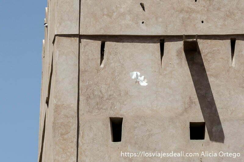 torre de la casa museo con una paloma joven volando frente al muro de adobe
