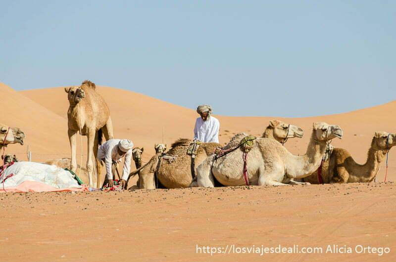 dos camelleros preparando sus camellos en el desierto