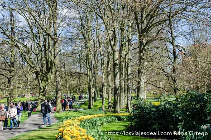 camino rodeado de grandes árboles en el parque de keukenhof