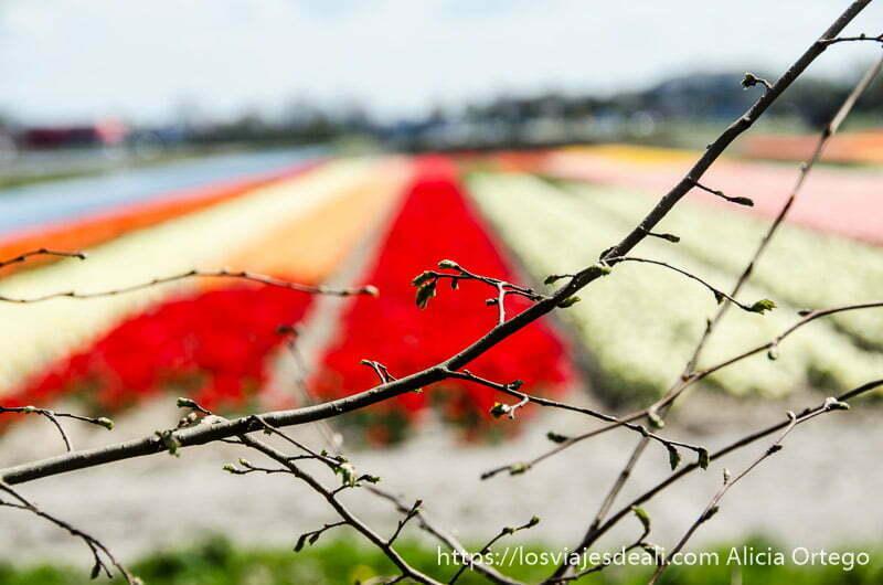 ramitas de árbol con fondo de campos de flores de varios colores desenfocados