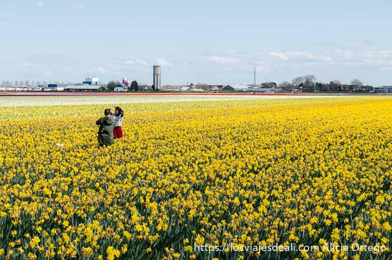 campo de cultivo de flores amarillas con una pareja fotografiándose