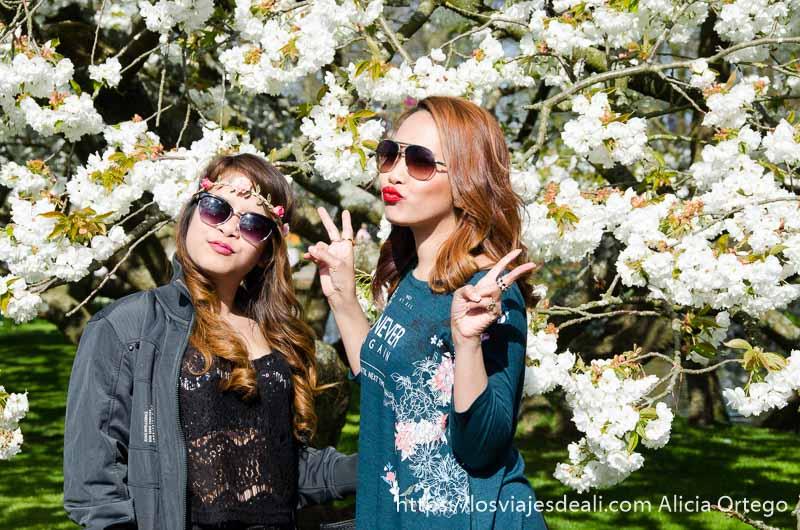 dos japonesas muy modernas con gafas de sol postureando delante de cerezos en flor