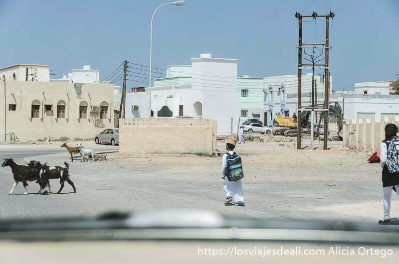 niño omaní con su traje tradicional y mochila volviendo del colegio y dos cabras cruzando la carretera