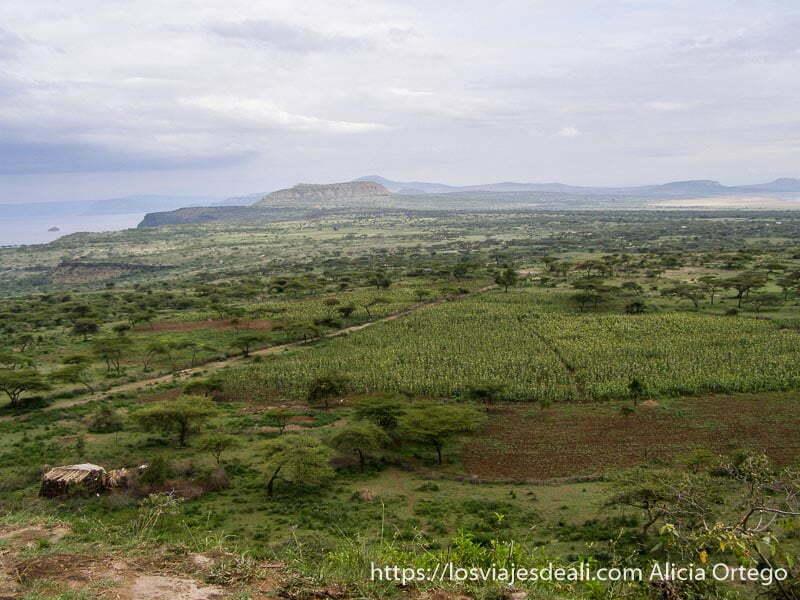 Cultivos a orillas del lago Abyata