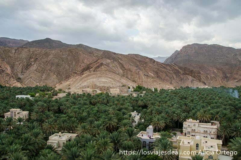 panorámica de oasis de omán birkat al muz con gran palmeral y montañas al fondo