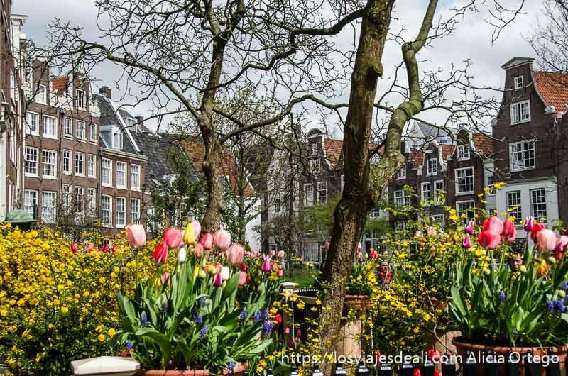 macetas con tulipanes de colores y casas detrás formando una plaza