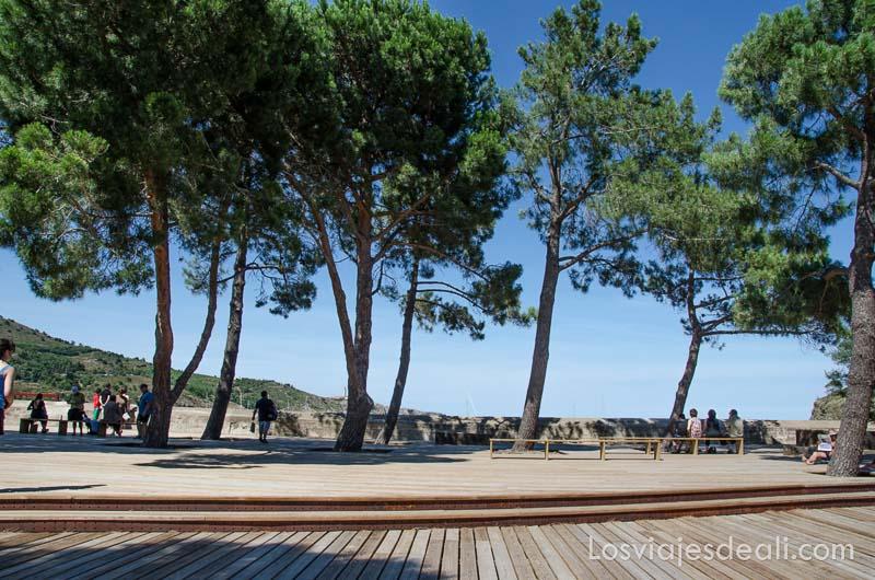 línea de pinos frente a la playa
