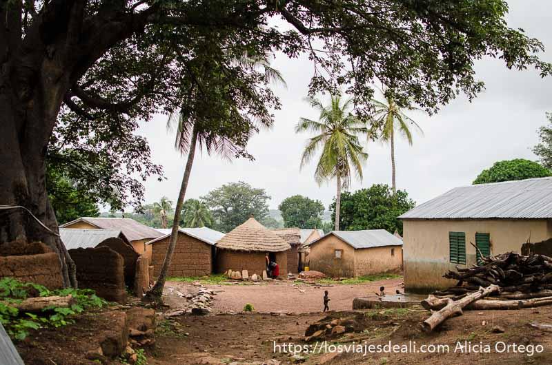 vista del pueblo taneka con gran árbol a un lado y palmeras al fondo tribus de benin