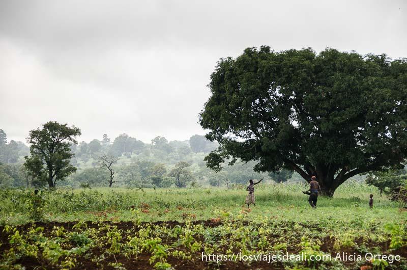 campos somba con grandes árboles y una pareja trabajando en ellos tribus de benin