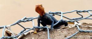 kousseri camerun