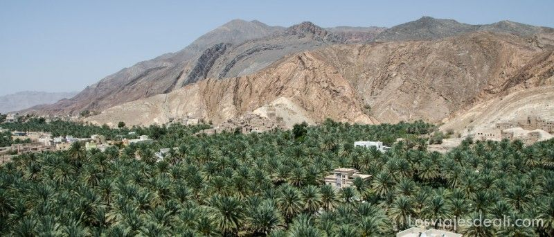 Oasis de Oman