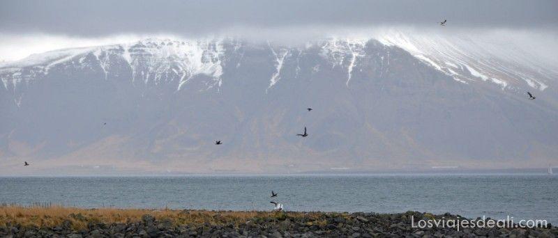 islandia excursión ballenas