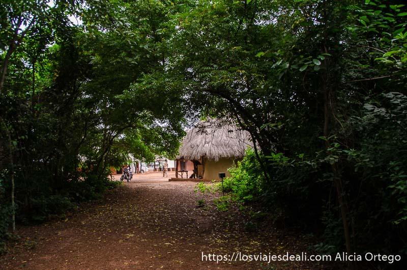 choza con tejado de paja al fondo de túnel hecho con ramas de gran árbol ruta en benin