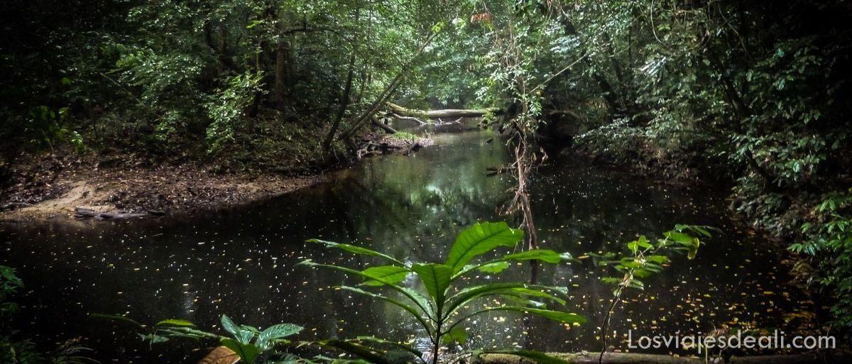 selva camerun