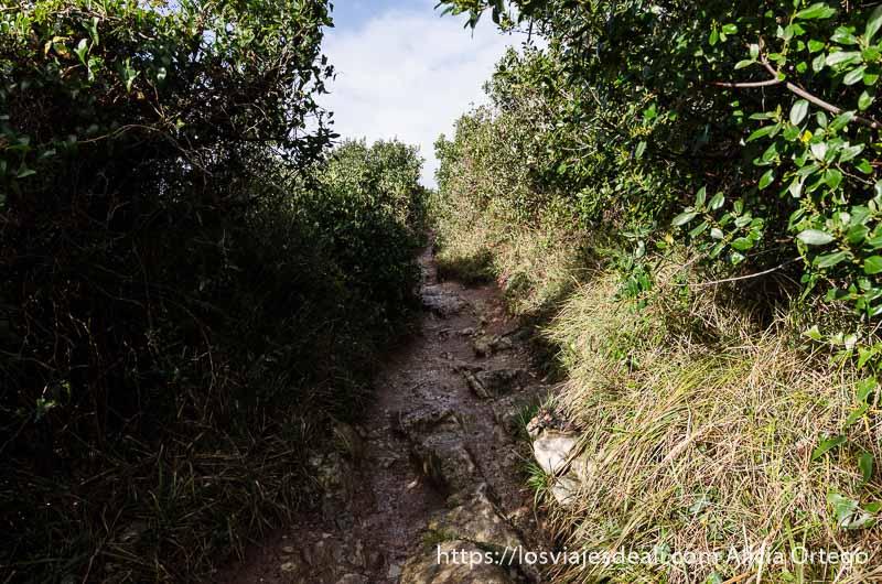 camino estrecho entre matorrales en el acantilado flysch de zumaia
