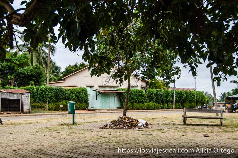 casa baja con valla cubierta de hiedra y gran árbol delante en ouidah historia de la esclavitud en benin