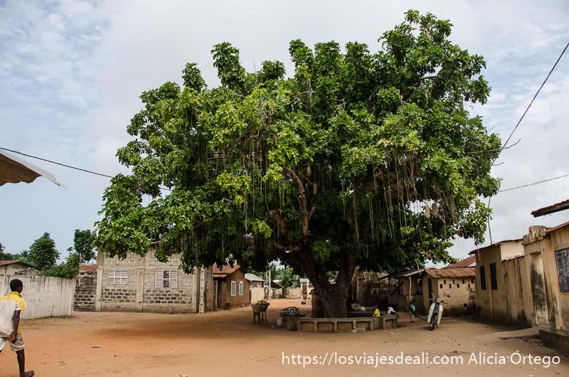 árbol en la plaza donde se subastaba a los esclavos en ouidah historia de la esclavitud en benin