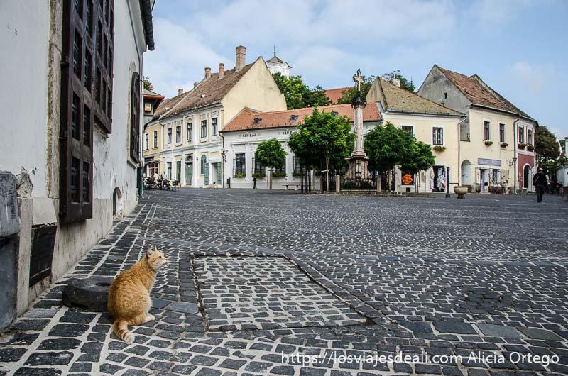 plaza de szentendre con suelo empedrado y gato en primer plano
