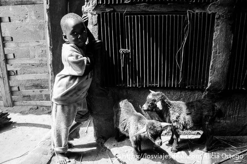 niño de tres años con dos cabritas pequeñas en benin