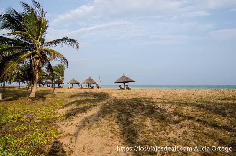 sombrillas de paja en una de las playas de benin con palmeras