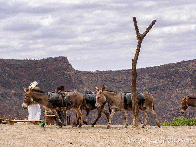 el-sod-etiopia