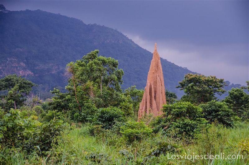 termitero enorme en medio del campo