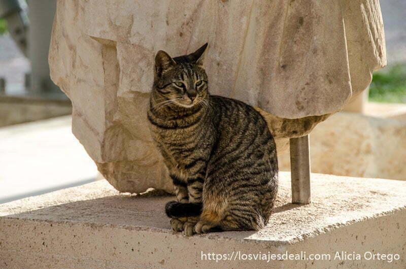 gato sentado bajo una estatua griega Acrópolis de Atenas y su museo