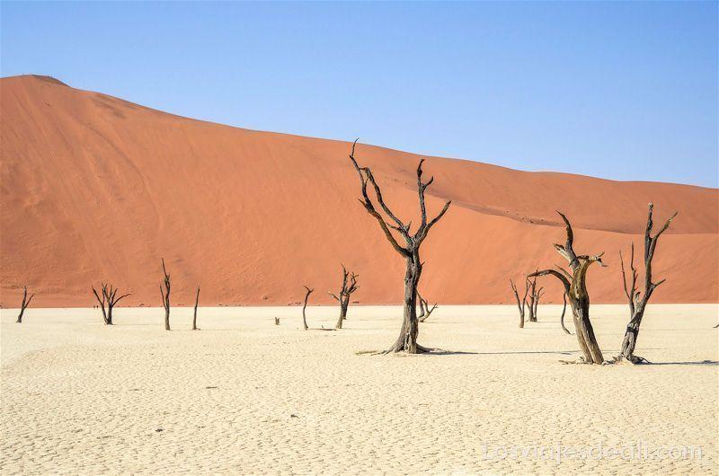 árboles secos rodeados de dunas en el Deadvlei de Namibia