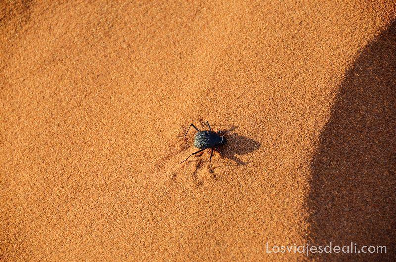escarabajo en la Duna 45