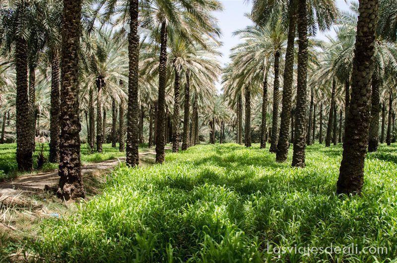 oasis de omán