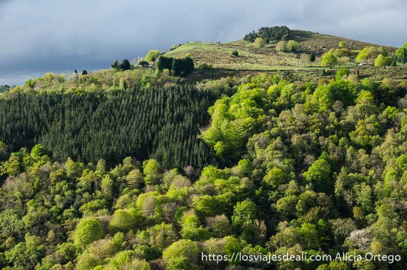 ladera de monte llena de bosque de distintos verdes qué ver en getaria y alrededores