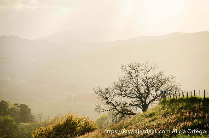 monte con árbol seco y luz dorada de atardecer qué ver en getaria y alrededores